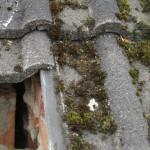 Nachbesserungsarbeiten durch unsachgemäße Einblasdämmung in 32549 Bad Oeynhausen